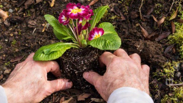 Çiçek Ekip Fidan Diktik